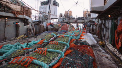 Russia's biggest MSC certified fishery's sustainability reconfirmed