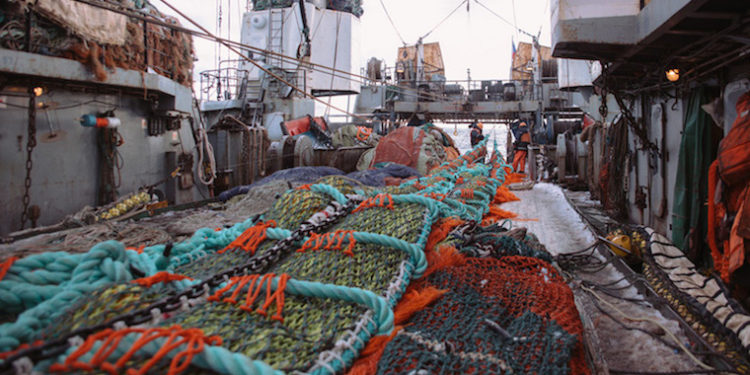The Russian pollock fishery has been re-certified by the MSC. Image: RFC - @ Fiskerforum