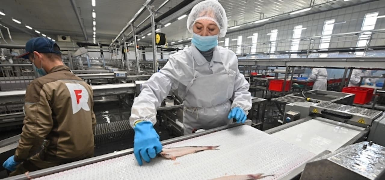 Russian Pollock starts production