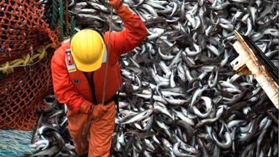 Russian catches reach 3.7 million tonnes this year