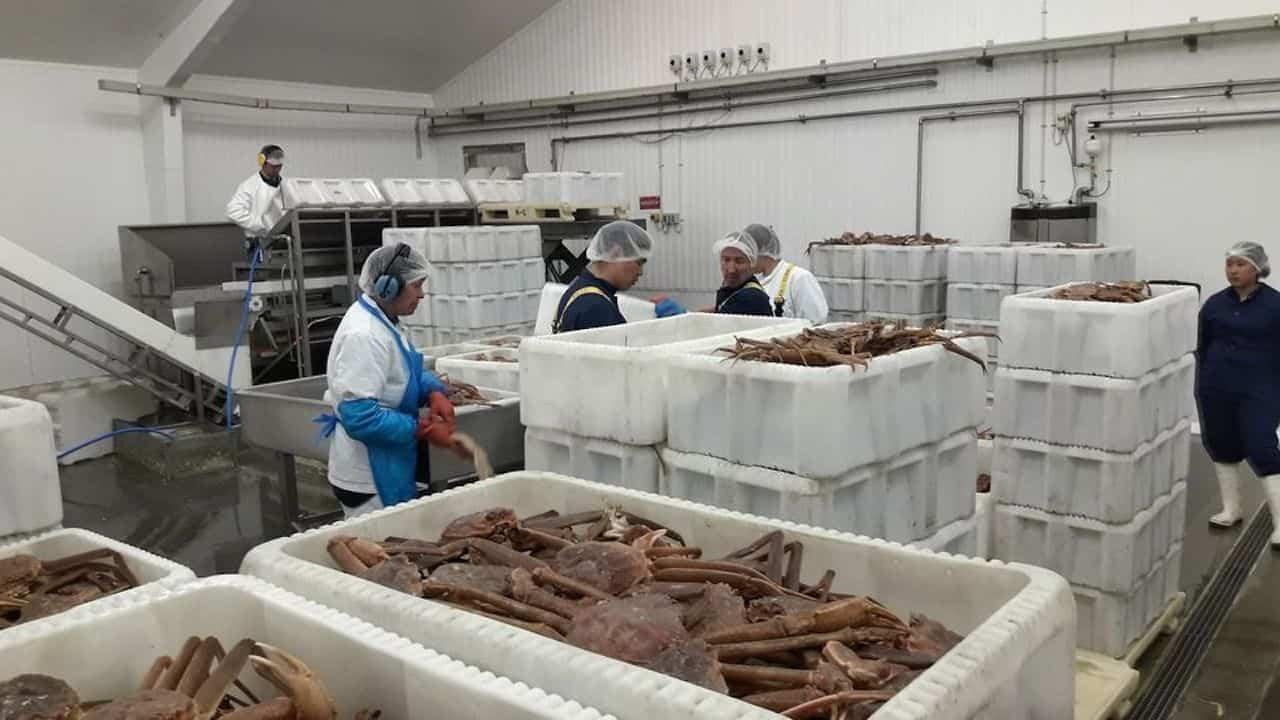 Good crab season for Royal Greenland's Qeqertarsuaq factory