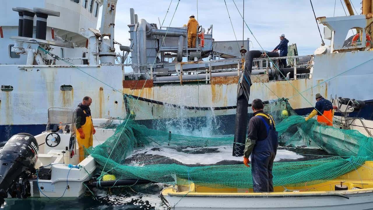 Royal Greenland's successful Nutaaq cod