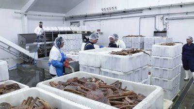 Crabs landings quadrupled at Royal Greenland factory