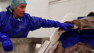 Royal Greenland halibut initiative means year-round employment