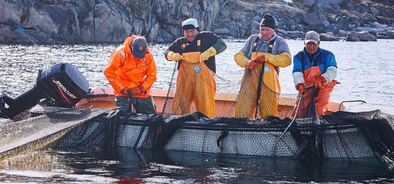 Read more about the article Better quality and better prices with live cod
