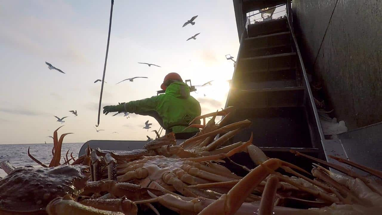 Five-fold increase in Russian Crab Company's catches