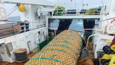 Whole redfish fleet using Gloria pelagic gear