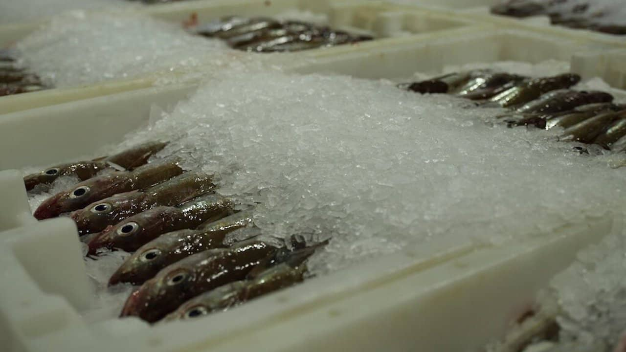 Read more about the article Scottish fishermen want panel review of scientific catch advice