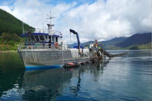 Mussel farming in the Marlborough Sounds - @ Fiskerforum