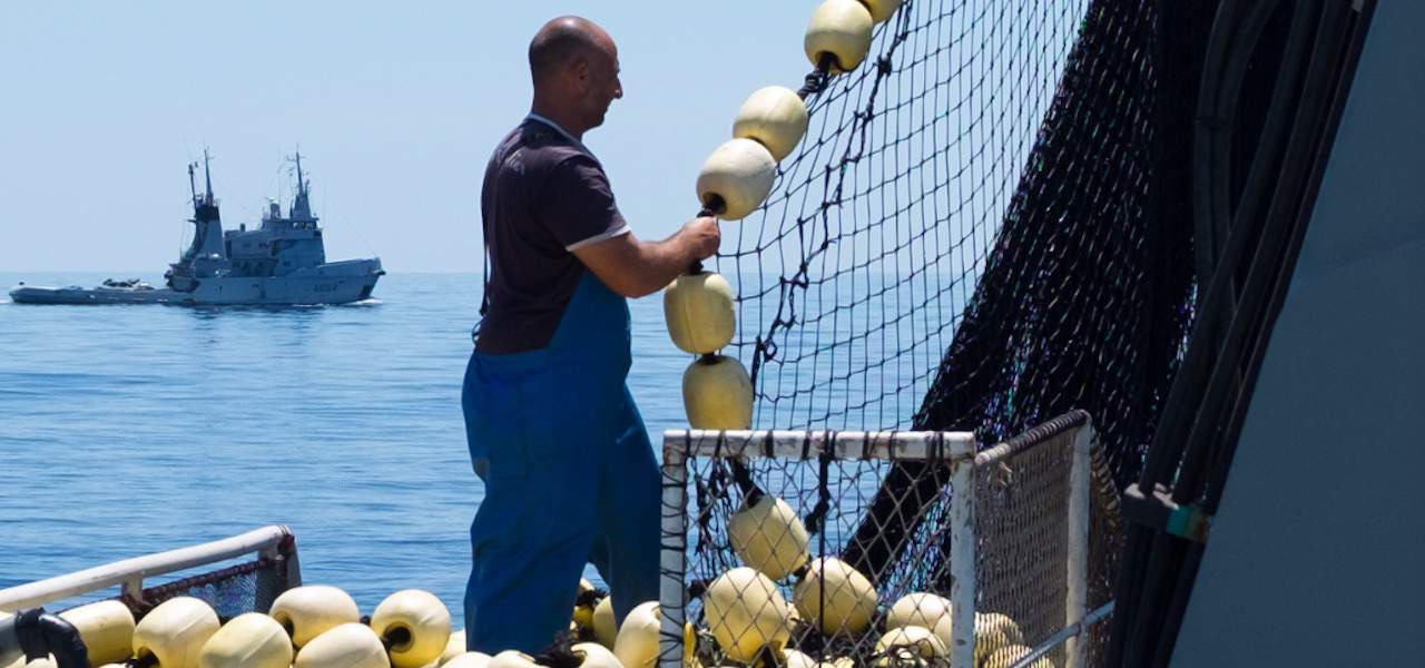 Mediterranean tuna prices expected to drop this year