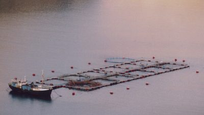 Salmon farm faces legal challenge