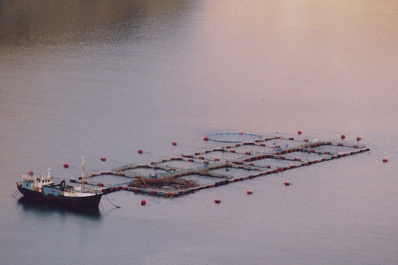 Salmon farm faces legal challenge