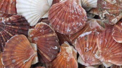Cornish court hands down fines for scalloping offences