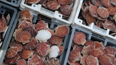 French fishermen condemn British scallop raiders