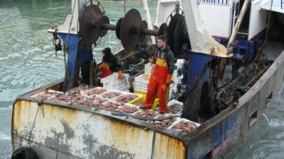 French fishermen's organisation regrets lack of agreement on scallops