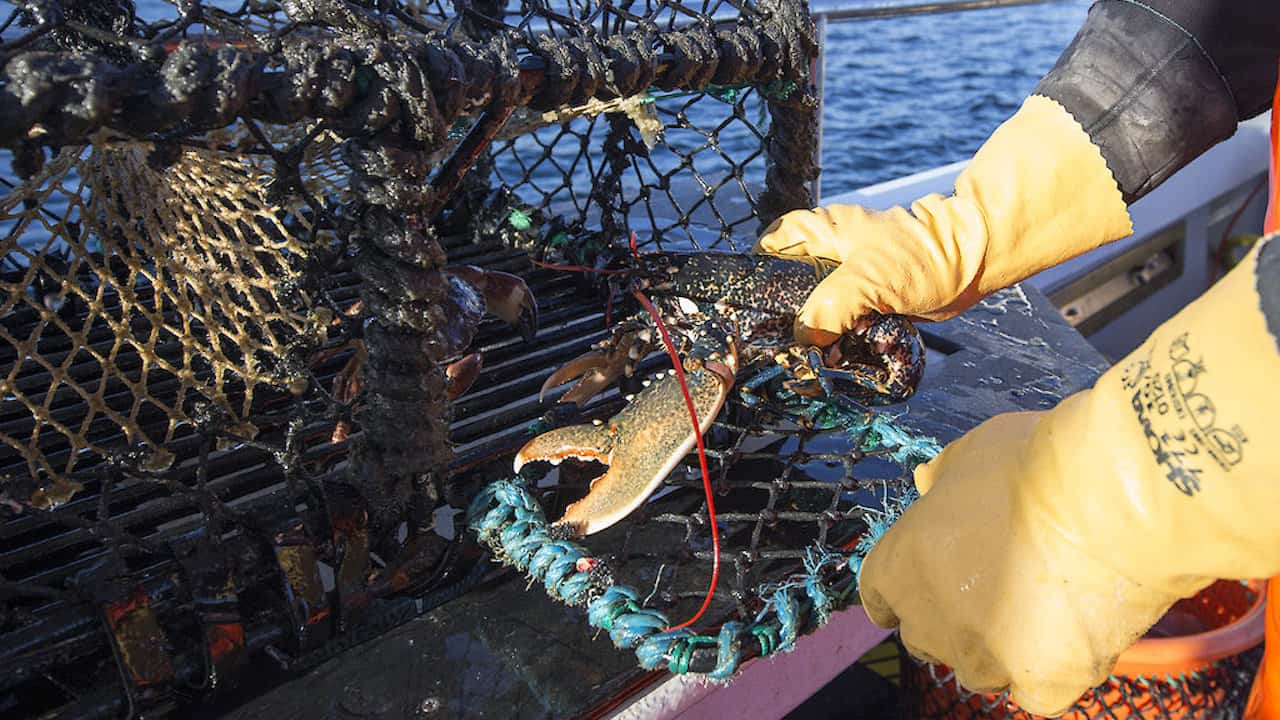 Read more about the article Shetland shellfish body hits out at minority risking sustainability gains