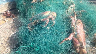 Shetland skippers demand tougher controls on gillnet and longline fishing