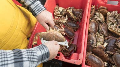 Shetland's sustainable shellfish fisheries accreditation renewed