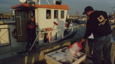 Confusion and official indifference –Baltic fisheries