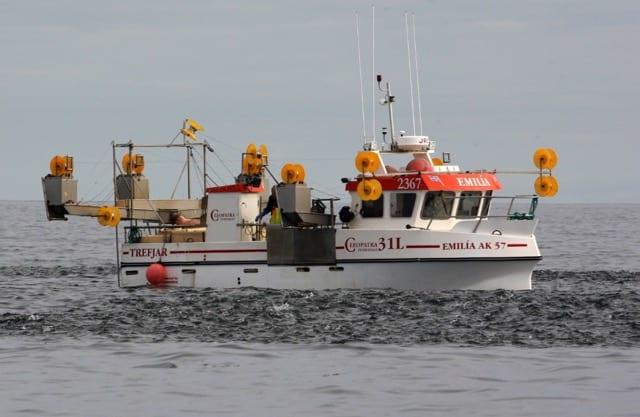 Calls for free fishing on mackerel