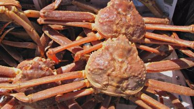 EU snow crab fishermen illegally excluded by Norway