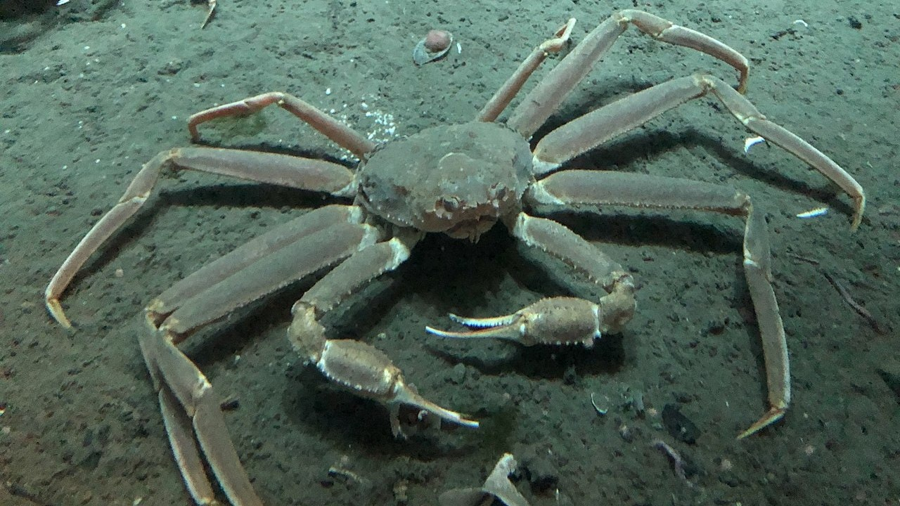 Industry asks for increased snow crab quota