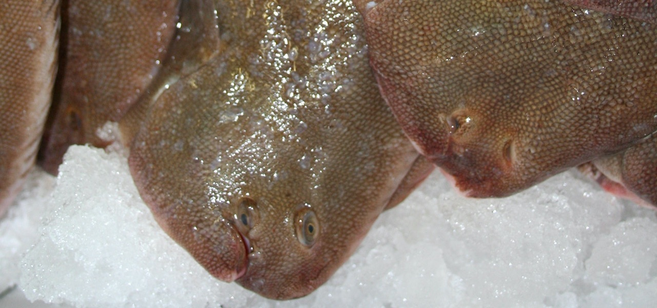 Increased North Sea plaice and sole quotas advised