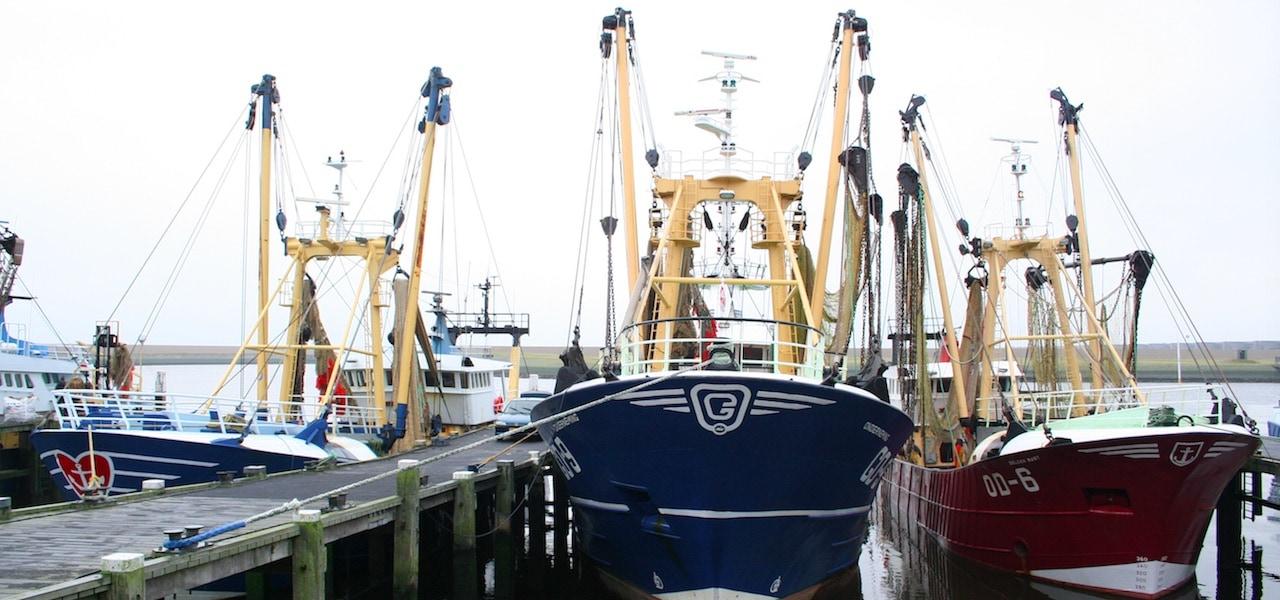 Dutch fleet buyout options under consideration