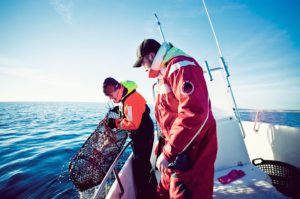 SwAm has proposed new rules on lobster - @ Fiskerforum
