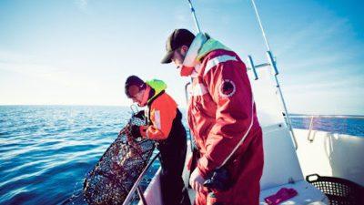 New Swedish lobster rules