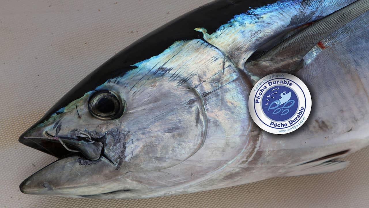 Small-scale tuna fishermen to get their day in court