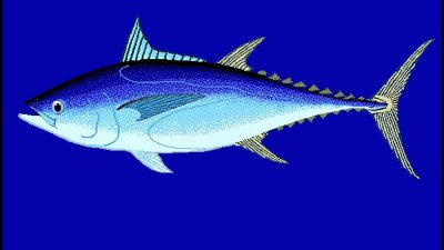 Northern bluefin failure