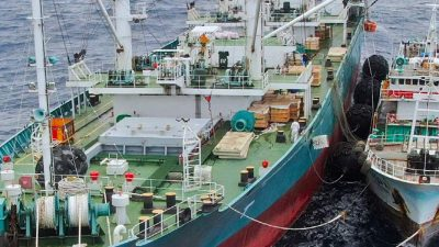 Taiwan investigates Greenpeace allegations