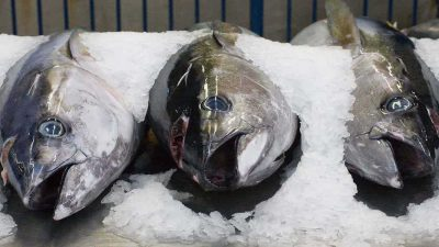 Queensland Government's recovery grant for tuna industry