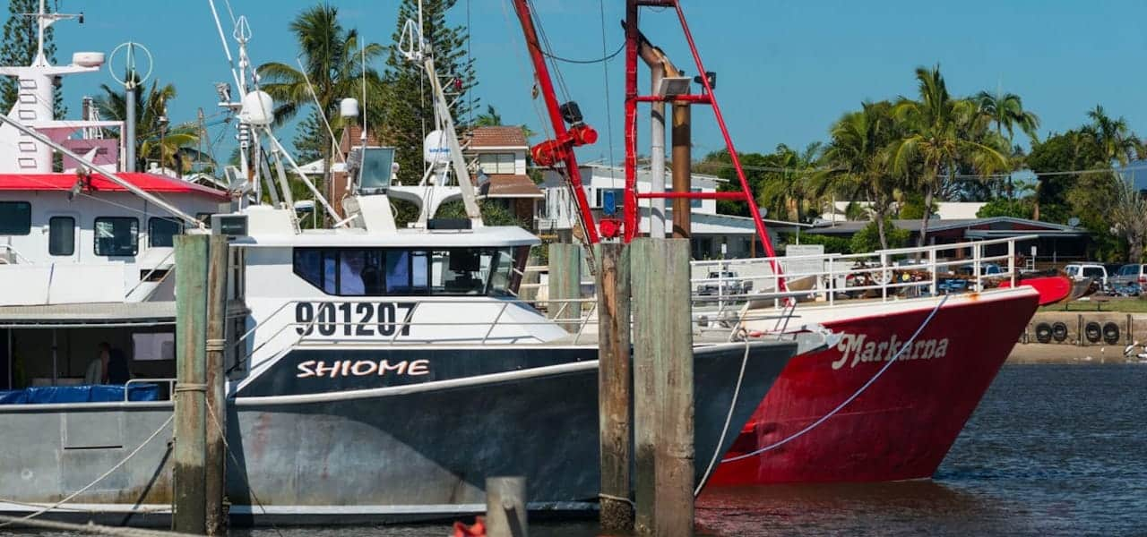 Read more about the article Australia's eastern tuna and billfish fishery receives MSC certification