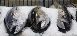Covid-19's huge impact on Australia's tuna business
