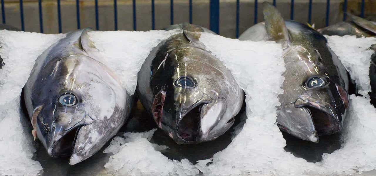 Covid-19's huge impact on Australia's tuna business