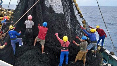 Ecuador approves National Tuna Action Plan