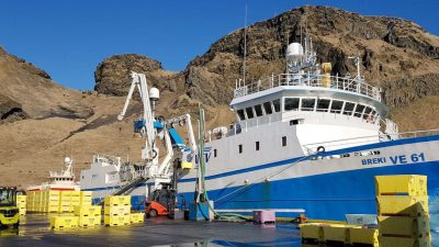Full trip landings, and full production at Westman Islands plant