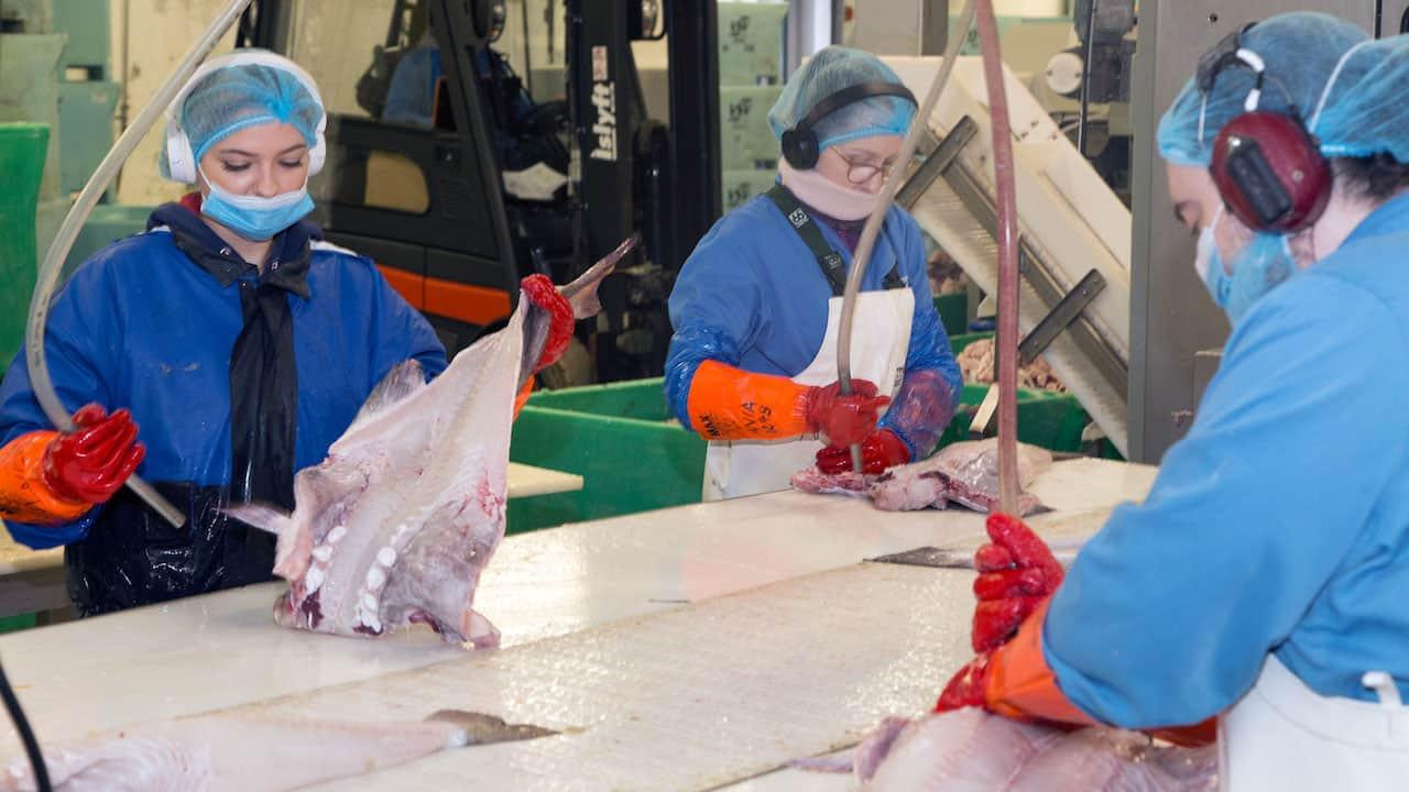 Westman Islands saltfish on Portuguese dinner tables – despite Covid
