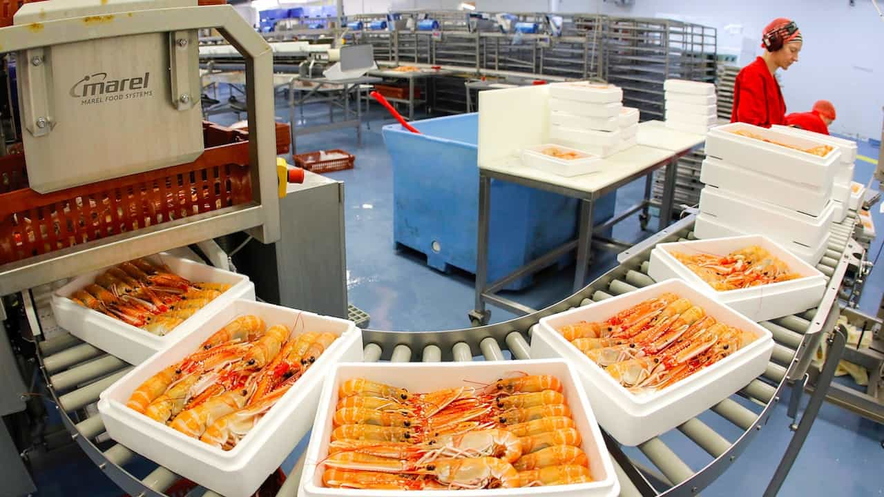 Westman Islands nephrops fishery underway