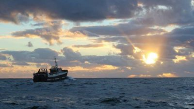 DAFF authorises rights transfers from Viking Group to Sea Harvest