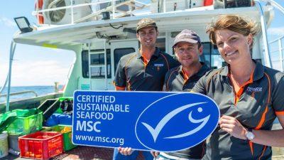 MSC certifies Western Australia's octopus fishery