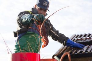 The Western Australian industry is opposed to the government holding a stake in the western rock lobster fishery. Image: WAFIC - @ Fiskerforum