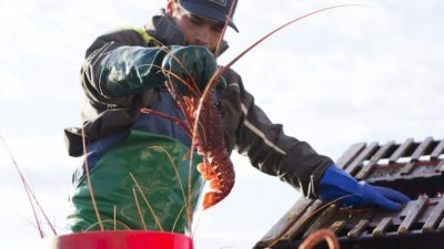 WA industry opposes government owning stake in lobster fishery