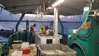 Western Australia pulls a world first with MSC-certified sustainable sea cucumber fishery