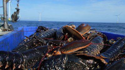 Irish Sea funding for Walney fishing communities