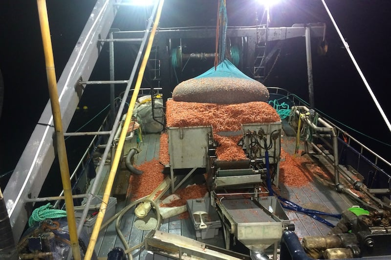 A deck load of shrimp