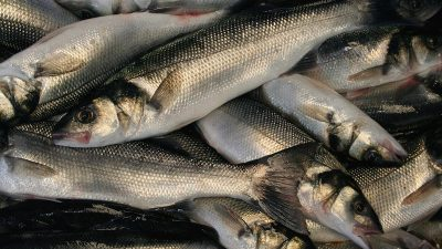 Regulation will increase bass discards