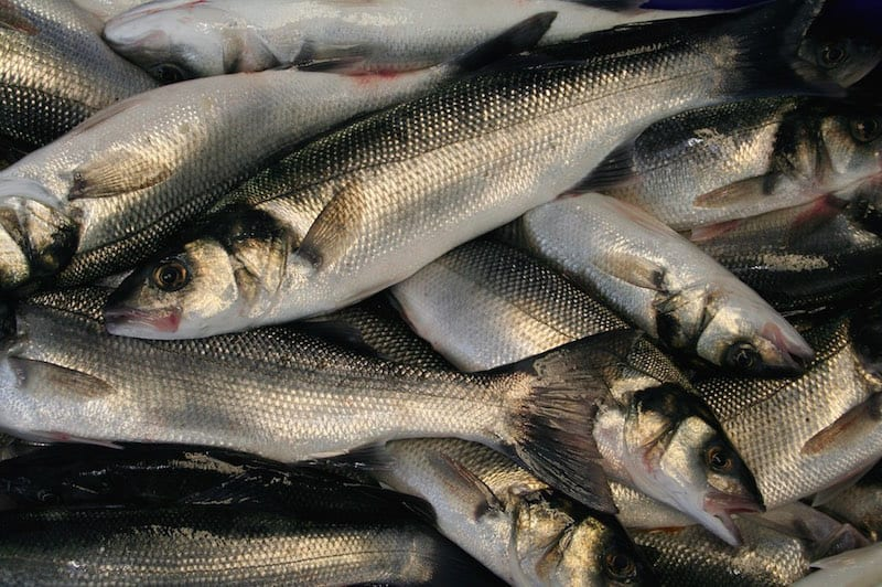 Read more about the article Line boats fear imminent French bass fishery closure